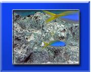 sorry! 海水魚の写真