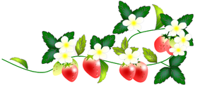 Strawberry_white