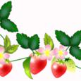 ピンクの花のいちご