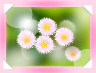 春紫苑 姫女苑