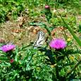 宝鏡山の花①
