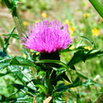 宝鏡山の花②